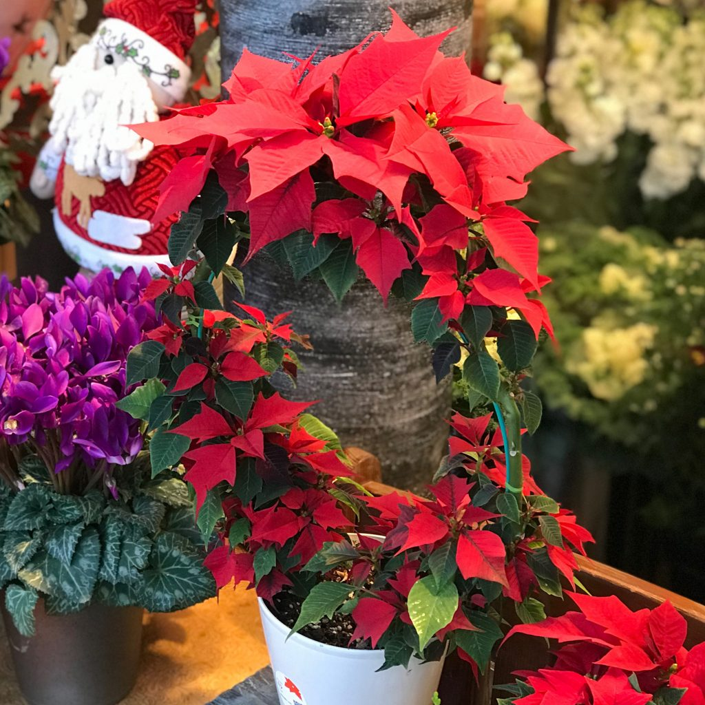 東京都大田区山王 大森の花屋 大花園(だいかえん)季節の旬な花をあなただけの贈り物に!上質でモダンな花贈りを大森スタイルでお届けします。クリスマスギフト