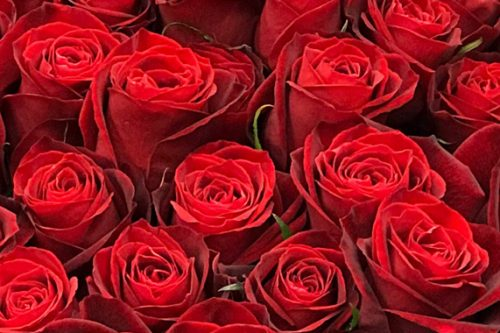 東京都大田区山王 大森の花屋 大花園(だいかえん)季節の旬な花をあなただけの贈り物に!上質でモダンな花贈りを大森スタイルでお届けします。クリスマス赤バラ