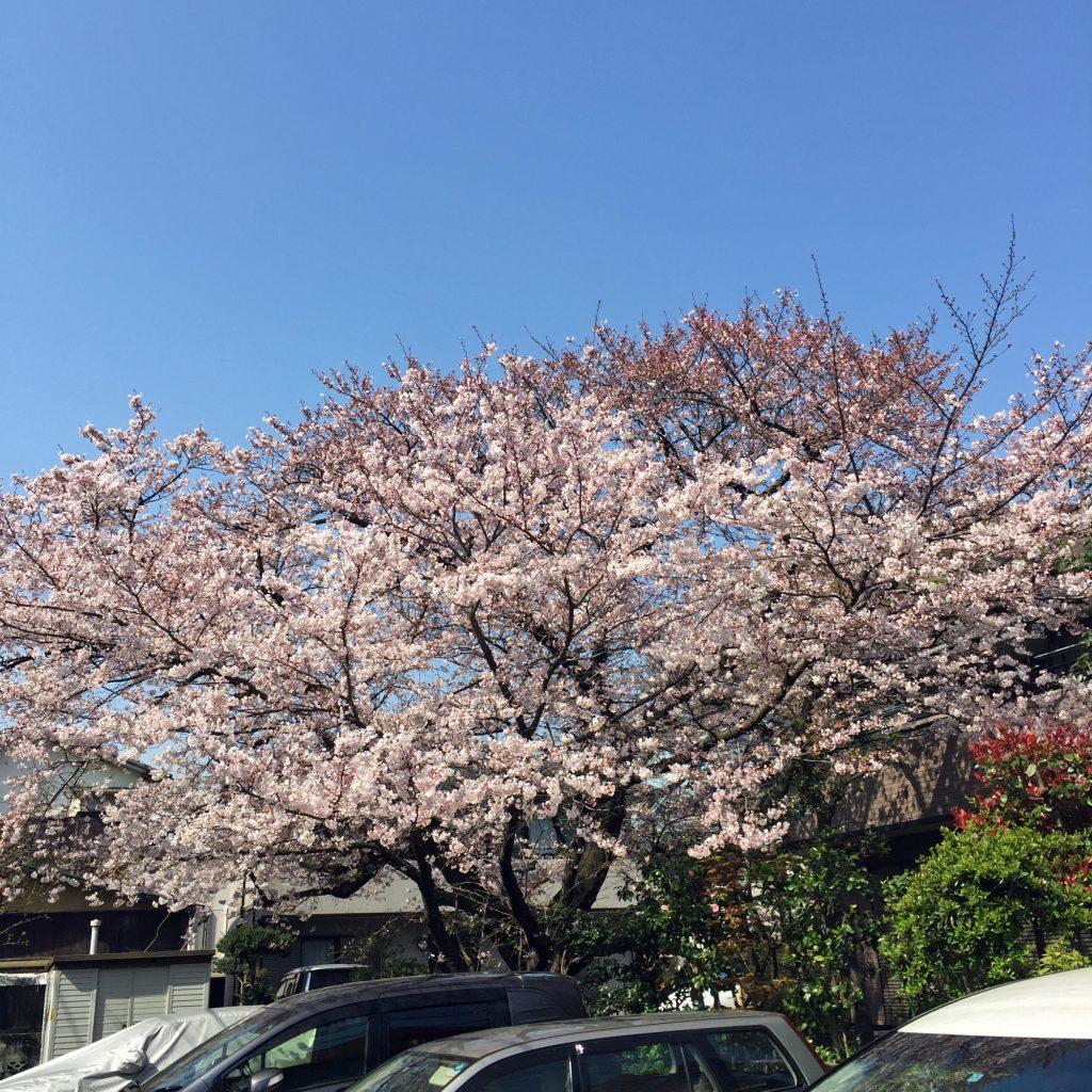 東京都大田区山王 大森の花屋 大花園(だいかえん)季節の旬な花をあなただけの贈り物に!上質でモダンな花贈りを大森スタイルでお届けします。さくらの日