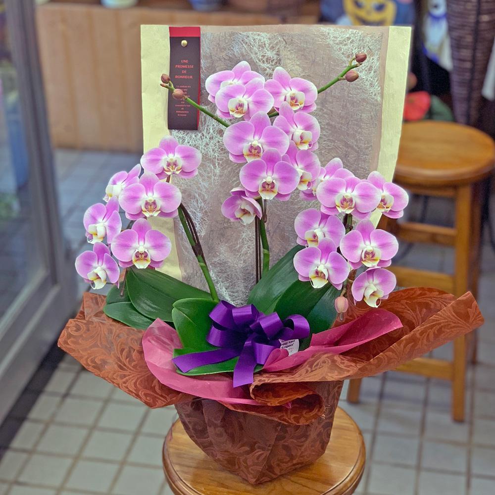 東京都大田区山王 大森の花屋 大花園(だいかえん)季節の旬な花をあなただけの贈り物に!上質でモダンな花贈りを大森スタイルでお届けします。ミニコチョウラン
