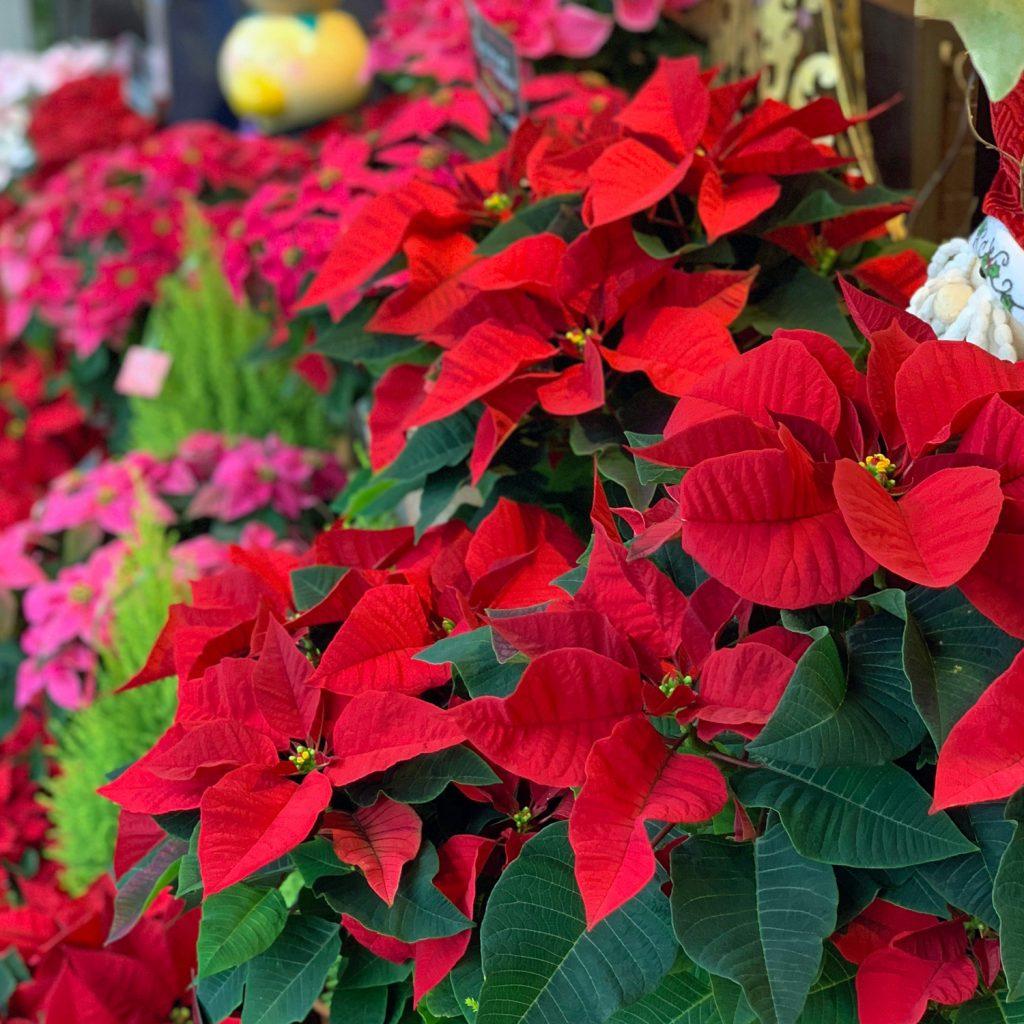 東京都大田区山王 大森の花屋 大花園(だいかえん)季節の旬な花をあなただけの贈り物に!上質でモダンな花贈りを大森スタイルでお届けします。いい夫婦の日