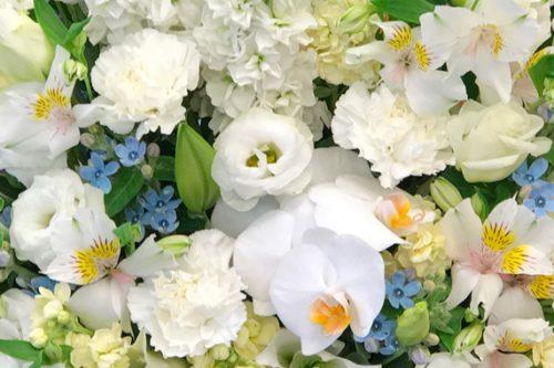東京都大田区山王 大森の花屋 大花園(だいかえん)季節の旬な花をあなただけの贈り物に!上質でモダンな花贈りを大森スタイルでお届けします。喪中見舞い